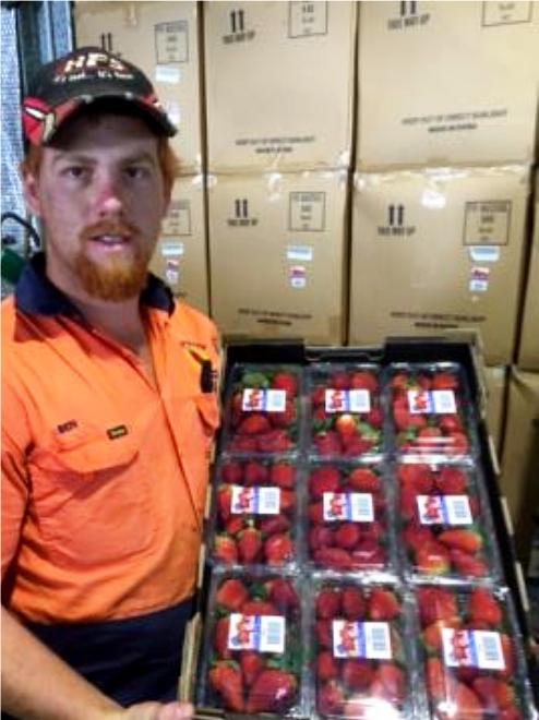 Berry Patch Ben Davey