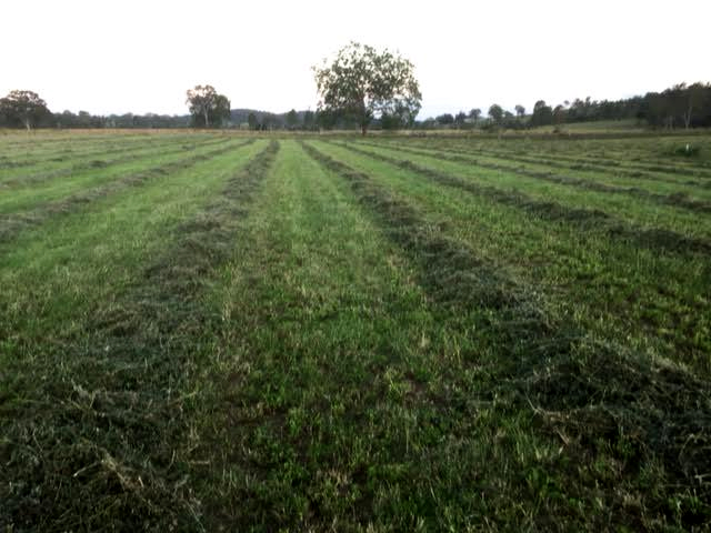 Lucerne crop treated with Rural Boss 2016