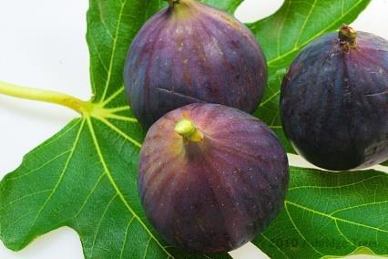 organic fig grower queensland