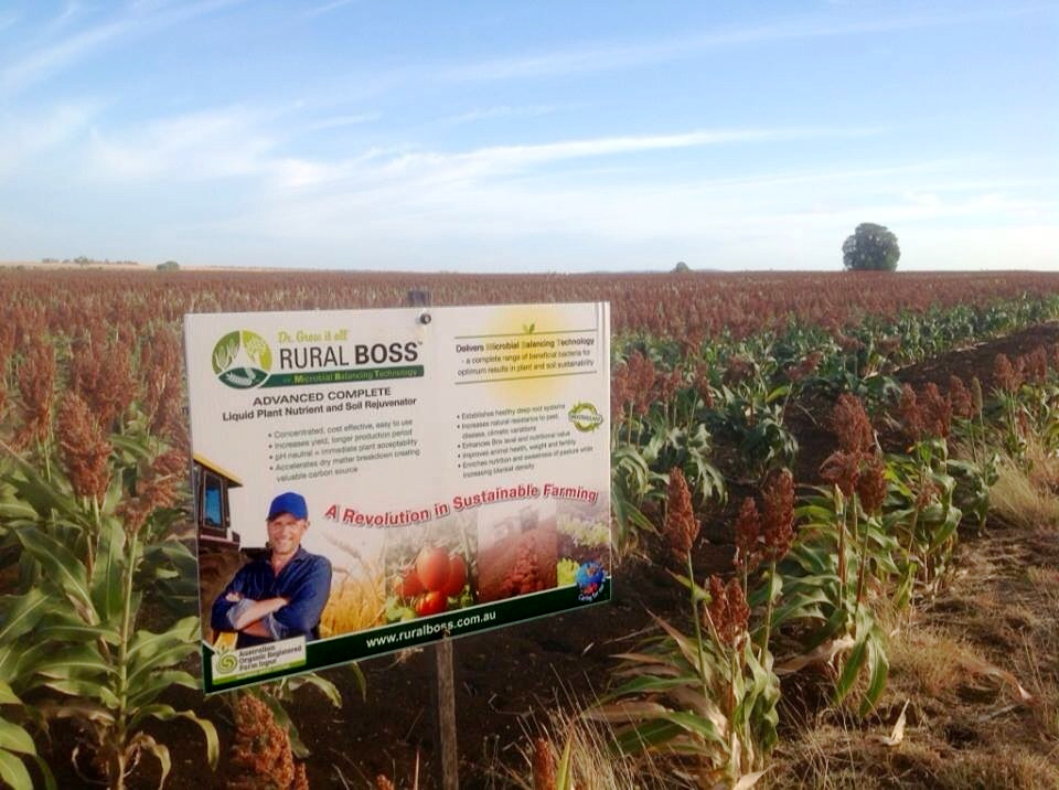 Rural Boss sorghum chick pea and wheat trials